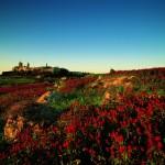 Mdina - Bildquelle: Fremdenverkehrsamt Malta