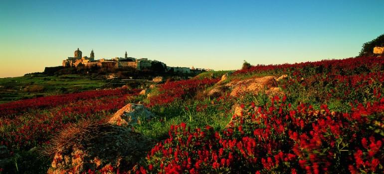 Fremdenverkehrsamt_Mdina im Hintergrund Vordergrund bluehende Felder