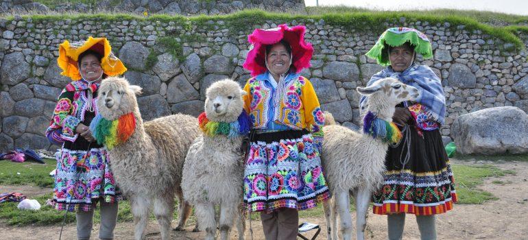 Alpaca, www.pixabay.com