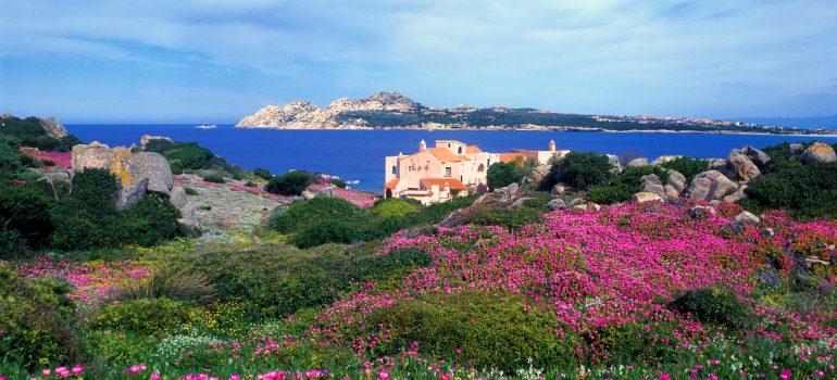 Sardinien Wanderreise, Blumenwiese an der Costa Smeralda, www.italiafoto.de, Wanderreise Sardinien, Arche Noah Reise