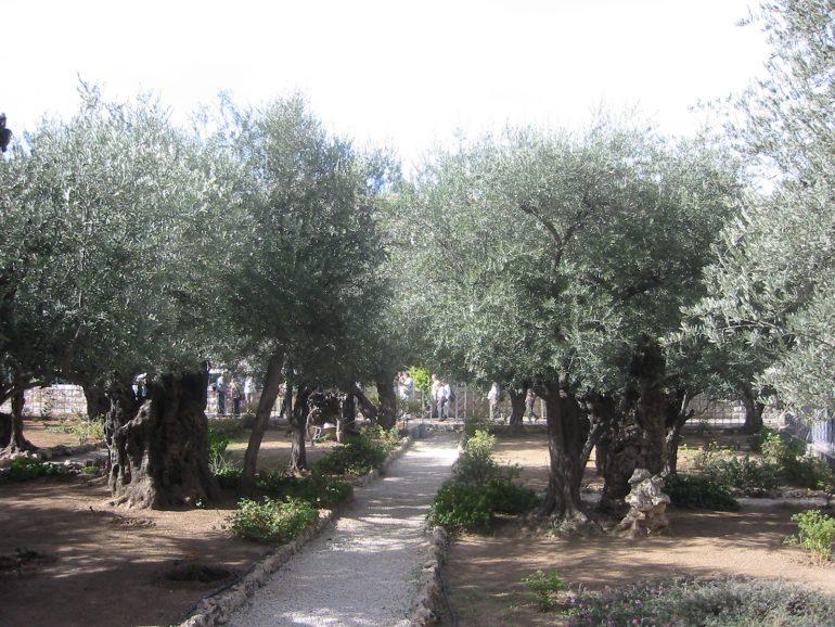 Garten Gethsemane, Israelreise, Pilgern ins heilige Land, Arche Noah Reisen