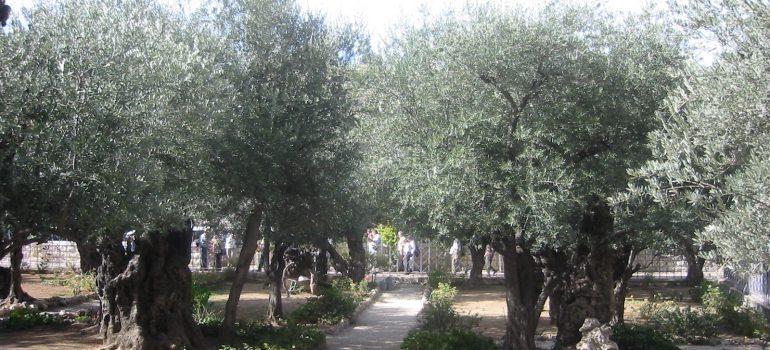 Garten Gethsemane, Pilgerreise Israel, Pilgern in Gruppe, Arche Noah Reisen