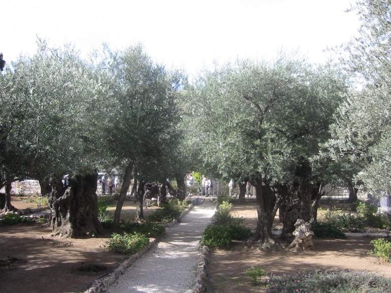Garten Gethsemane, Pilgern Israel, Israel an Ostern, Gruppenreise Ostern