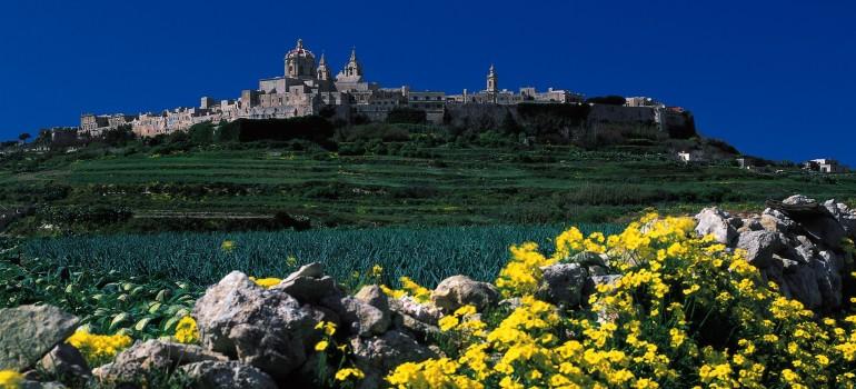Mdina im Hintergrund gruene Felder gelbe Blumen davor-Fremdenverkehrsamt, Reise für Familien, Gruppenreise Malta, Arche Noah Reisen