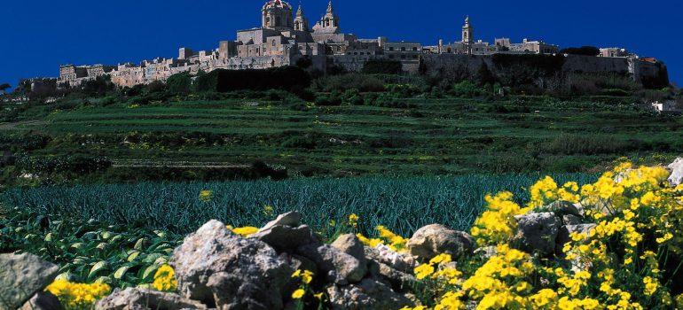 Mdina im Hintergrund gruene Felder gelbe Blumen davor, Fremdenverkehrsamt Malta, Gruppenreise Malta, Reise mit dem Paulinus, Arche Noah Reisen