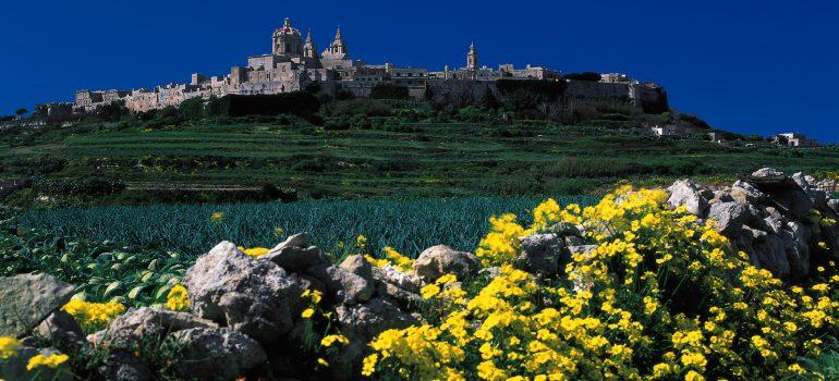Mdina im Hintergrund gruene Felder gelbe Blumen davor, Fremdenverkehrsamt, Gruppenreise planen, Arche Noah Reisen