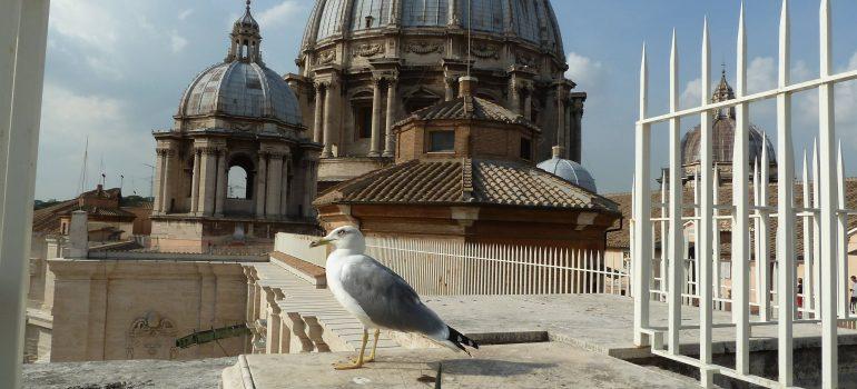 Rom, Vogel auf d. Peterskirche, Gruppenreise komplett organisiert, Rom für Wiederholer, Arche Noah Reisen