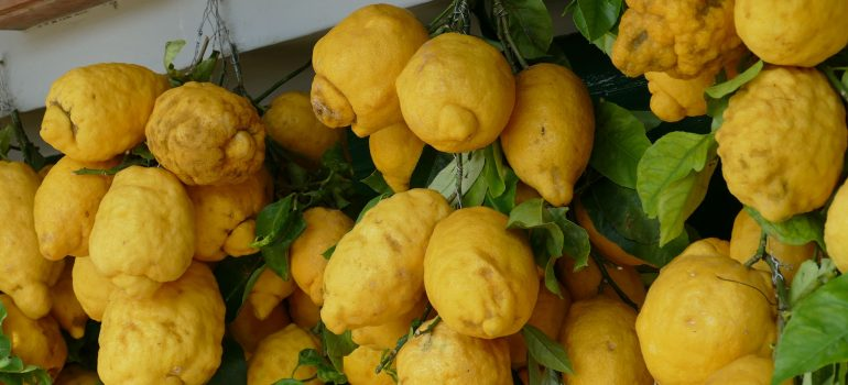 Zitronen, Bild von falco auf Pixabay